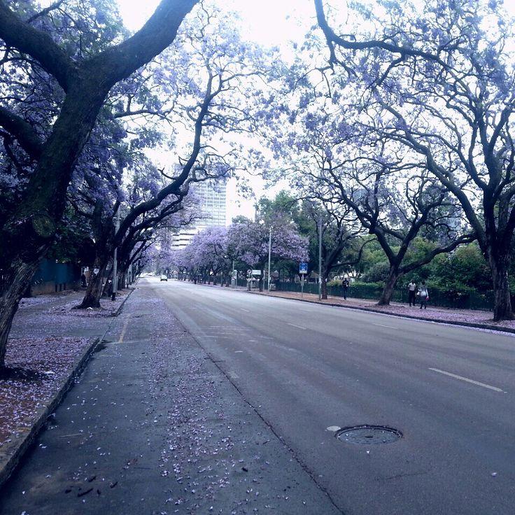 Beatiful city of Pretoria ♥