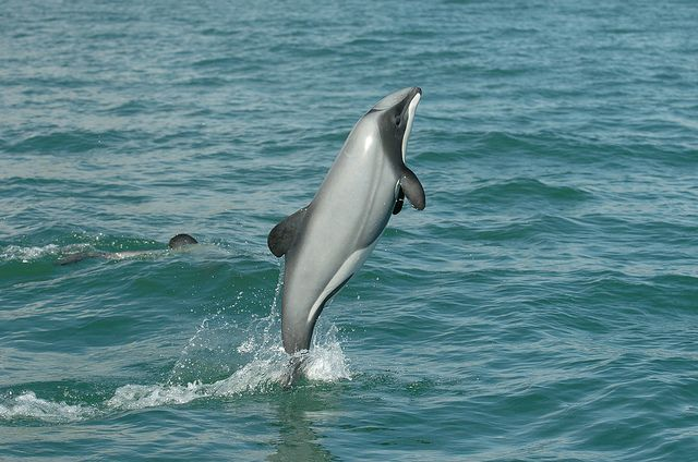 Protect Rare Dolphin Species from Habitat Destruction - ForceChange