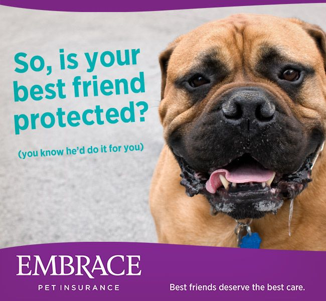 The Best Insurance Quotes: 159 Best Images About Helpful Pet Tips On Pinterest