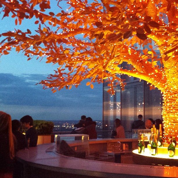 Sushi Samba 02 : fantastic view, inspirational tree, delicious food and groovy music
