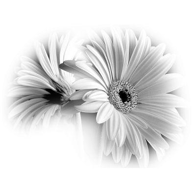 fleurs noir et blanc - Recherche Google