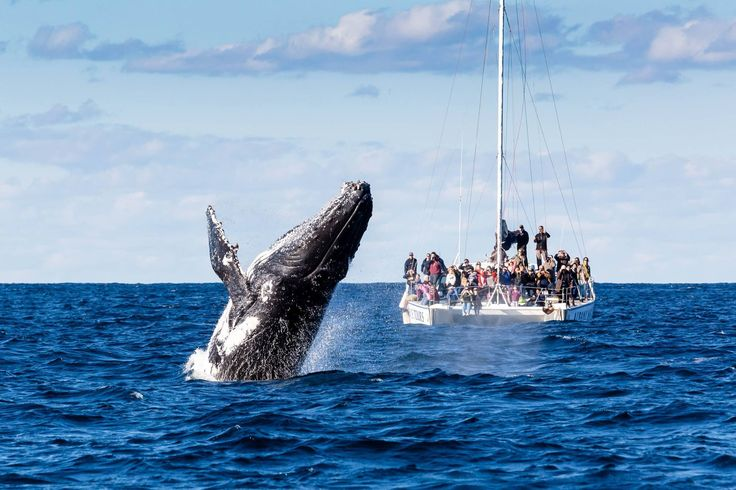 Whale watching in Albany, WA