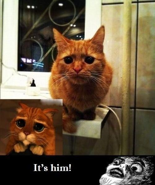 awwwwwCat, Laugh, Funny Stuff, Humor, Things, Kitty, Real Puss, Boots, Animal