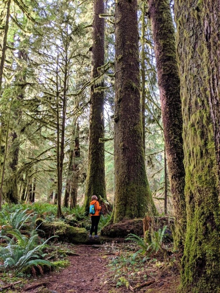 A Complete Guide to Carmanah Walbran Provincial Park