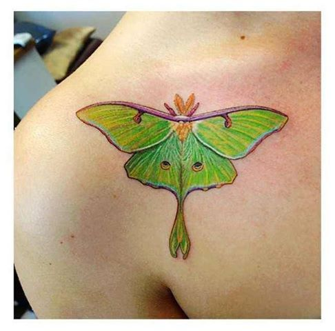 moth tattoo                                                                                                                                                     More
