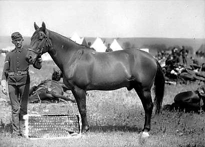 Comanche était un cheval appartenant à l'armée américaine. Il fut ensuite acheté…