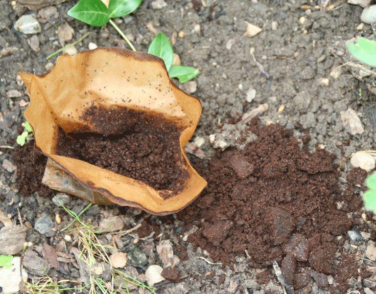 Kaffeesatz Für Welche Pflanzen