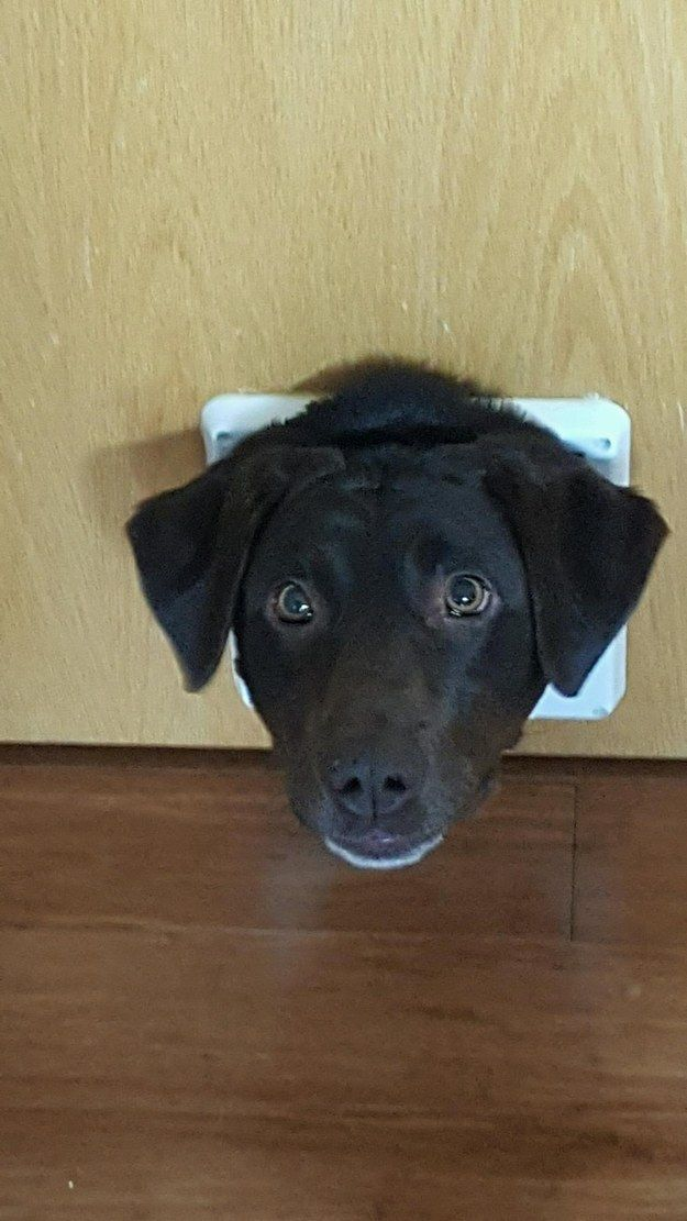 Best Animals Images On Pinterest Cardboard Boxes Cat Stuff - 16 grumpy puppies who perfectly understand how you feel about going back to work after summer break