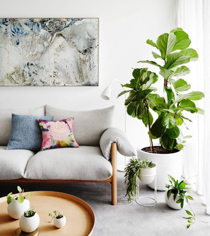 What To Look For When Buying Indoor Plants