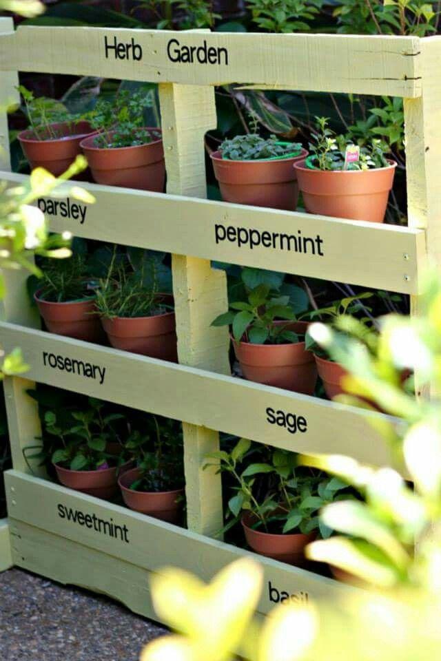 Mostrador de plantas