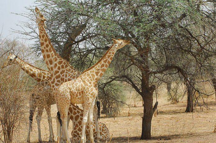 Da Niamey al Parco Nazionale W Niamey Niger foto 4069