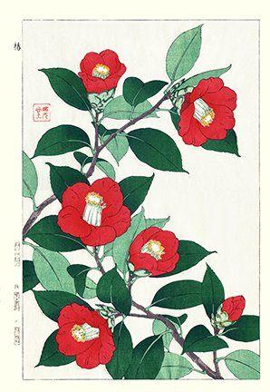 Artist: Shodo Kawarazaki. Keywords: flower floral modern contemporary style woodblock woodcut print picture hanga japan japanese orient oriental asia asian art readercollection.com camellia