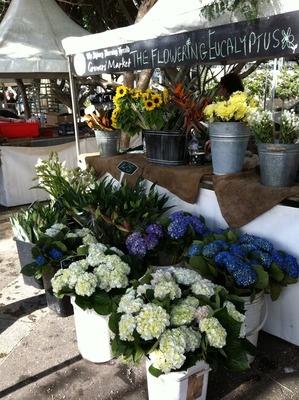 Sydney WeekendNotes - Grower's Market @ Pyrmont Bay Park - Sydney