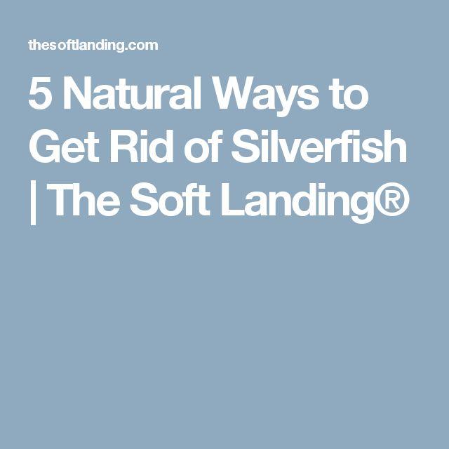 17 Best Ideas About Silverfish On Pinterest Roach Killer