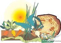 Food Today - sicurezza negli alimenti