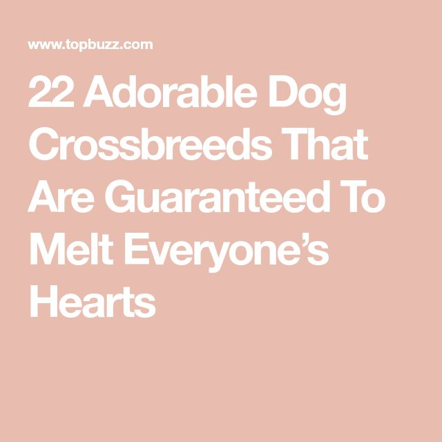 22 Adorable Dog Crossbreeds That Are Guaranteed To Melt Everyone's Hearts