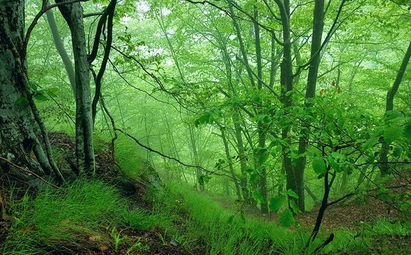 Nature Green Color Forest Growth Day Beauty In Nature No People Outdoors Perfect View Beauty Of Nature EyeEmNewHere Green Green Green!  Green Green Green!  Mountains And Sky Looking Down From Above Trees Collection Awesome_nature_shots Grass Wild Fog Foggy Weather Foggy Landscape Trees And Nature Dracula Country RomaniaIsAmazing