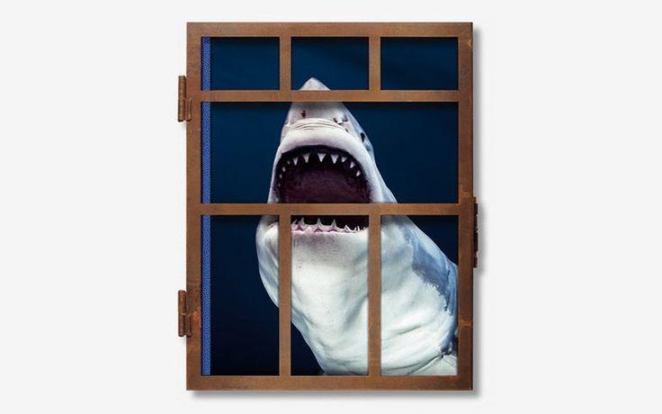 Michael Muller's New Taschen XXL Shark Book Is on Sale | InsideHook
