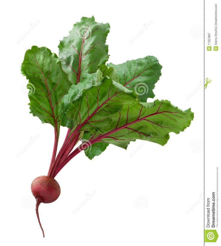 Beet Isolated Royalty Free Stock Photography - Image: 17357887