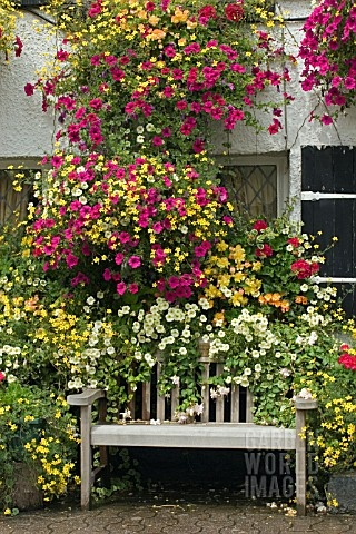 Hanging baskets & window boxes make us think of summer! Whichever plants you choose for your displays, trailing avalanche of colour and foliage will certainly brighten up your garden.