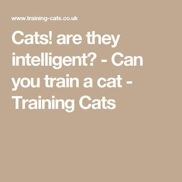 Cats! are they intelligent? - Can you train a cat - Training Cats