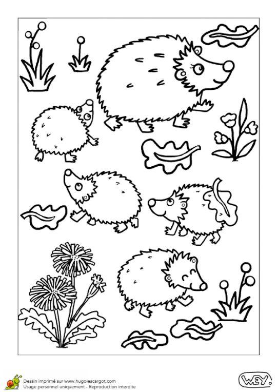 Coloriage bebe animaux maman herisson et ses bebes
