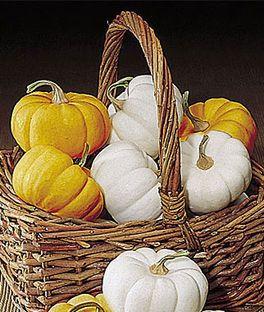 Dynia/ ang. Pumpkin (Mini Harvest Blend)