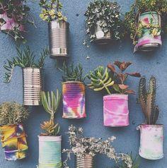plantas na parede, suculentas