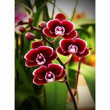 DIY 3D Diamant Mozaïek Paarse orchideeën Handgemaakte Diamanten Schilderen Borduurpakketten Diamant Borduurwerk Patronen Steentjes Arts(China (Mainland))