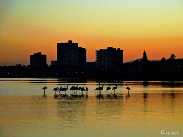 Sunrise:  Milnerton Lagoon, Cape Town (c) Floresence - July 2015