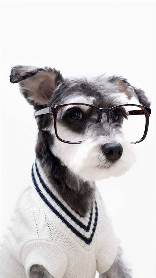 Future Yrics Puppy Dog