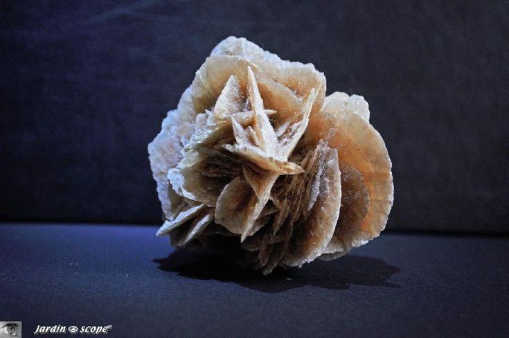 Des fleurs pétrifiées dans le sable du désert...