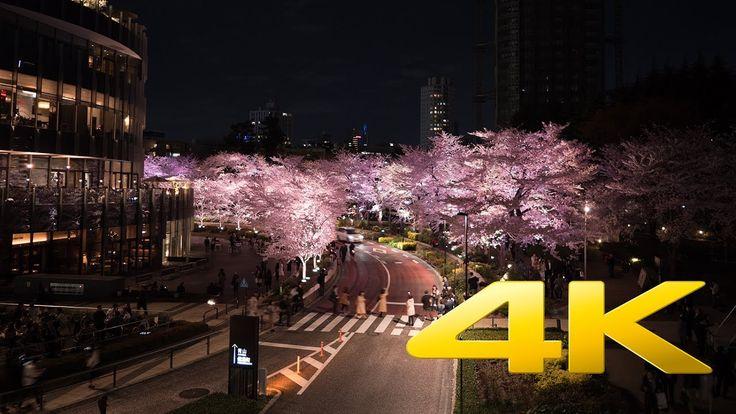 Tokyo Midtown Cherry Blossoms illumination - Tokyo - 東京ミッドタウン - 4K Ultra HD