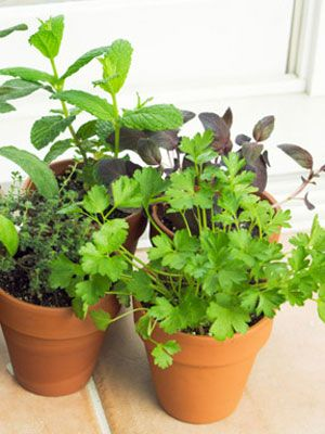 how to grow vegetables indoors in winter