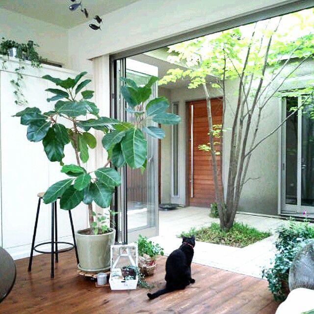 coconana165さんのお部屋写真 garden