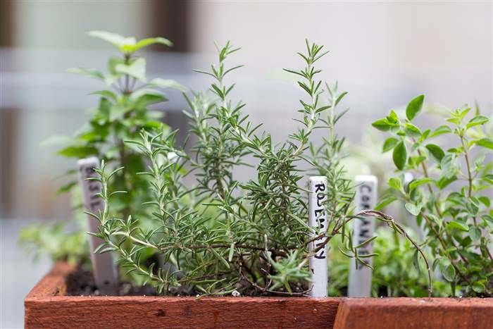 Growing herbs - which to grow together..light and water M. Stewart