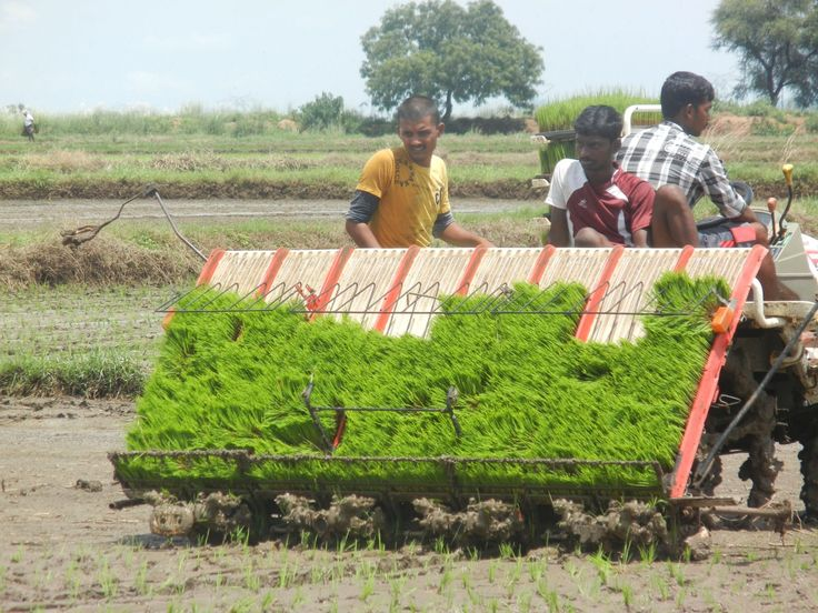 Growing rice with less water: case studies from India | CCAFS: CGIAR research program on Climate Change, Agriculture and Food Security