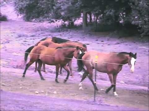 Adventure Horse Riding in NYS by Mary Dixon Smilla13