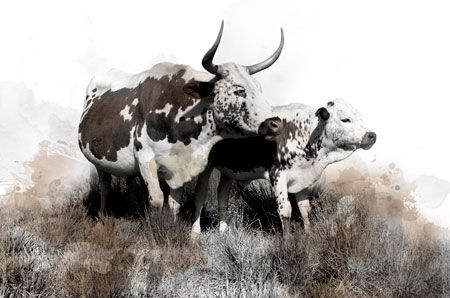 'Water Colour 3' Canvas Print. Available in a range of sizes. R1650 - R2650. Delivery is FREE to anywhere in South Africa!