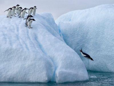 ファーストペンギン - Google 検索