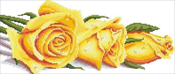 Вышивка крестом желтые розы. Вышивка крестом розы схемы бесплатно