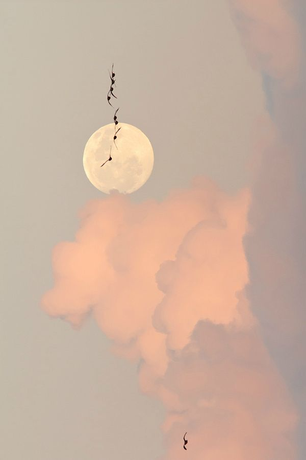 Beautiful Nature with a full moon to complete ✻❤♡•••★•••♡•••ѕмιℓєѕ