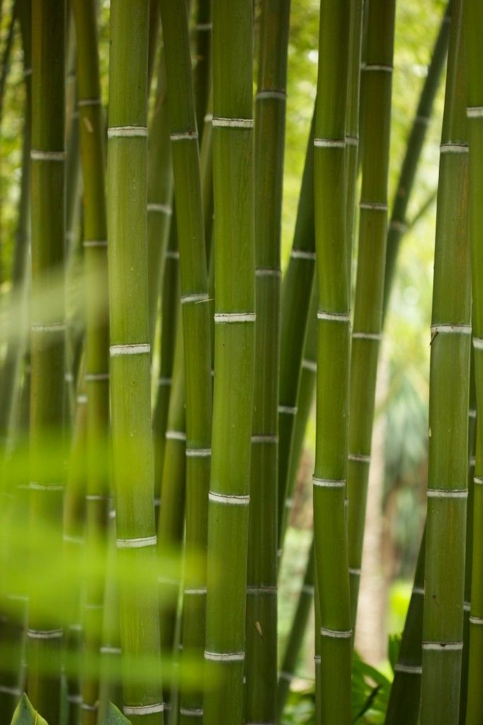 108 best Bamboo images on Pinterest | Bamboo wall, Wall decal and ...