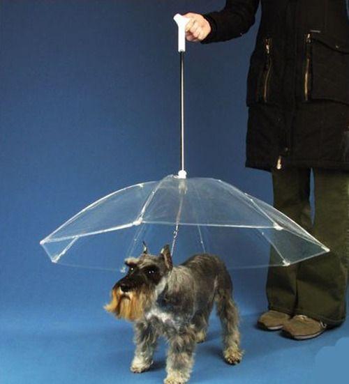 Dogbrella  I think I'd need 4