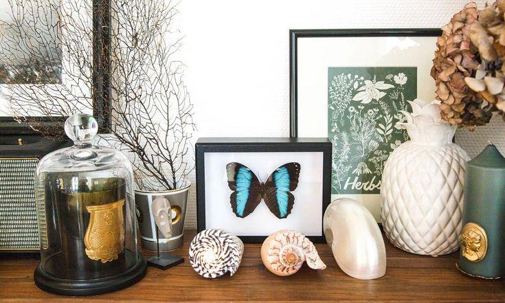Cabinet de curiosités emménagé Papillons Coquillages Bougie Trudon Fleurs séchées Appartement Camille Co Paris