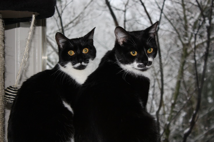 My cats, Edna and Groucho.