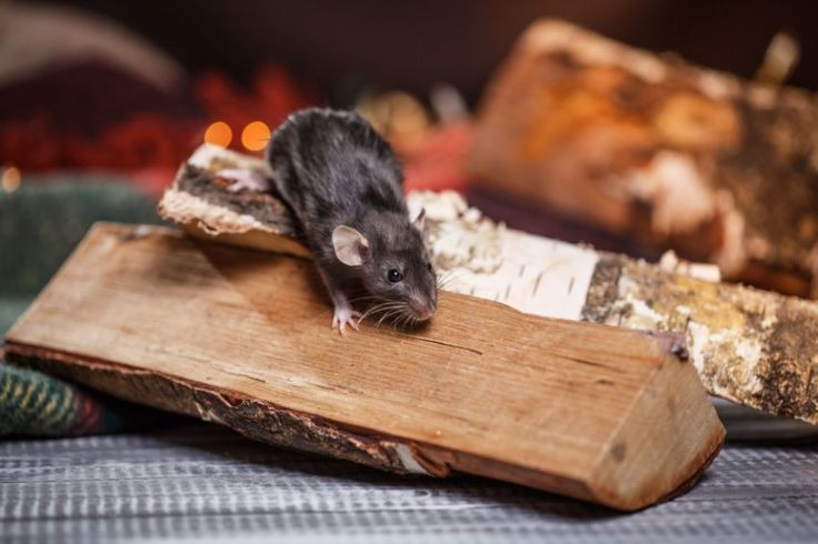 How to prevent pests from entering your home this winter