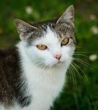 Learn about Cat Fleas, Cat allergy symptoms, Flea infestation & Cat fleas treatment. Also know about Fleas on Cats & How to get rid of fleas on cats.