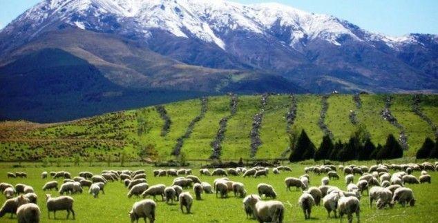 Stel zelf je Nieuw Zeeland vakantie samen met bouwstenen. Je reist en slaapt in de sfeer van het land. We helpen je graag met jouw ideale rondreis.