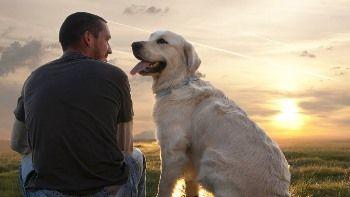 Consejos para el Cuidado de tu Perro http://www.mascotadomestica.com/articulos-sobre-perros/consejos-para-el-cuidado-de-tu-perro.html